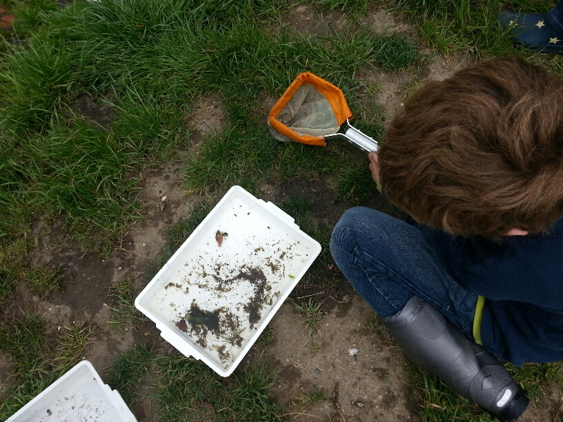 Looking at the invertebrates of the Quaggy